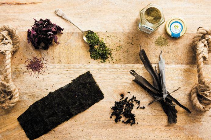 Irish seaweed kelp nori dulse dillisk wakame Fiona Uyema Fused