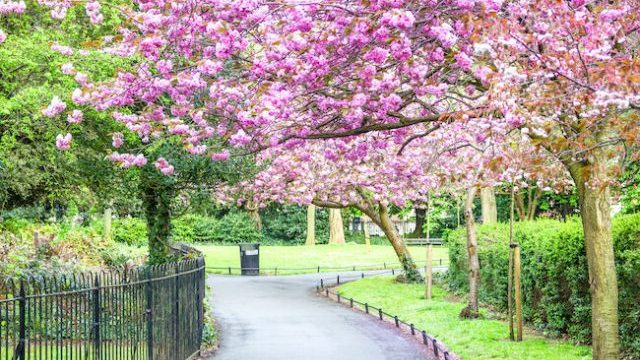 6 Of The Best Places In Ireland To Experience Cherry Blossom Season